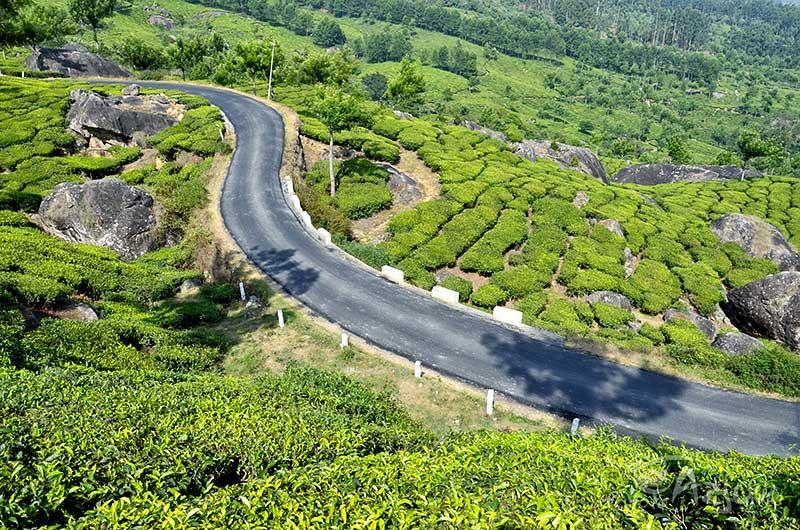 Plantacja i fabryka herbaty w okolicach Nuwara Eliya