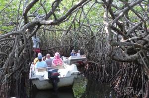 Lasy namorzynowe nad Rzeką Madhu