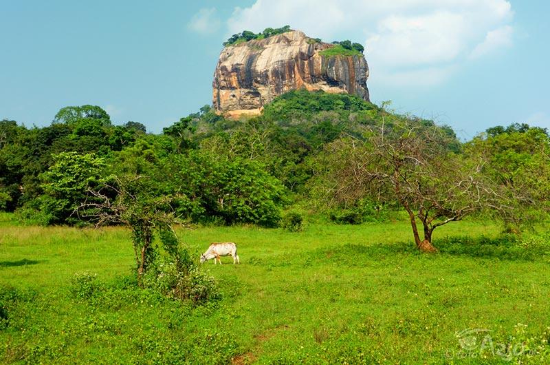 Sigiriya - skalna forteca