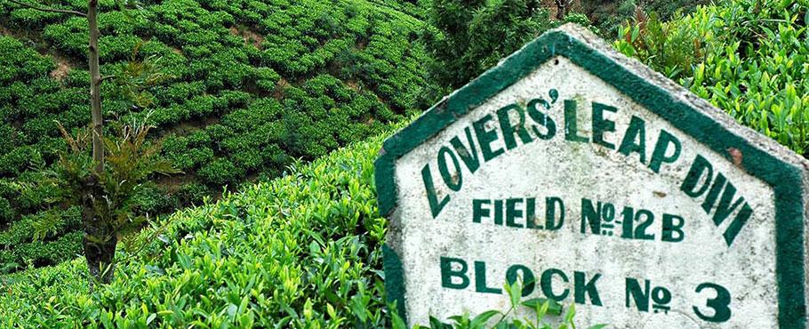 Kraina herbaty, Sri Lanka
