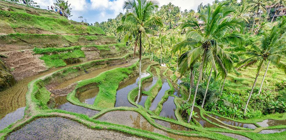 Tegalalang – fotograficzna ikony Bali