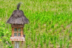 Pola ryżowe, Bali